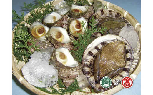 (お魚センターみくりや)あわび・さざえ海の貝セット【大山ブランド会】30-T2