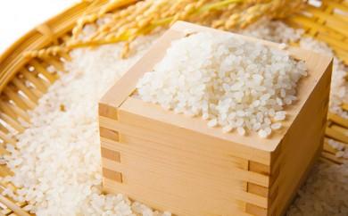 [№5734-0043]令和元年度 泉崎村産 コシヒカリ(白米) 10kg 【木野内さんが作った米】