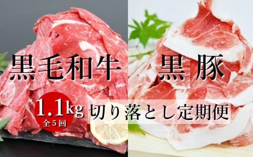□【モリモリ定期便】鹿児島県産黒毛和牛&黒豚 切落し定期便(全5回)