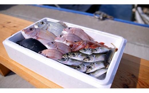 【5回定期便】真鯛にサザエ、季節の地魚!福津の海産物定期便[A6101]