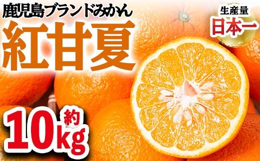 紅甘夏【10kg】