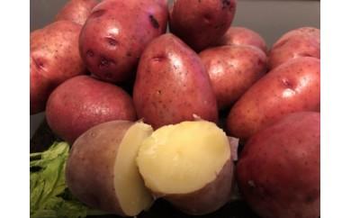 【期間限定】<網走産>秋の収穫美味レッドムーンじゃがいも 10kg