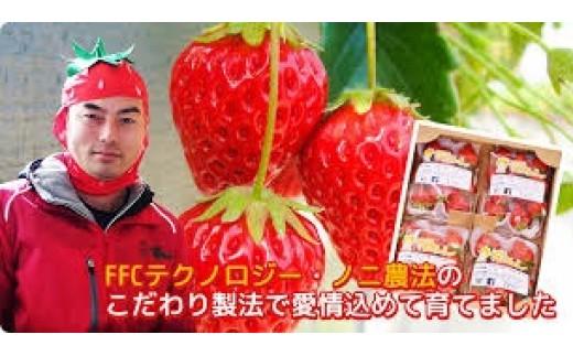 01E-075 イチゴ屋けんちゃん朝どりいちご(300g×4パック)