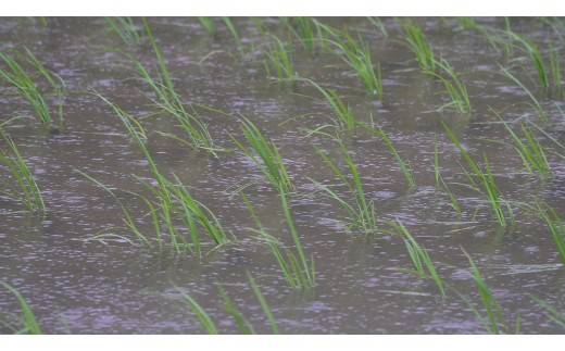 兵庫県西脇市黒田庄町(くろだしょうちょう)は酒米山田錦の育成条件が揃う数少ない地です。この地で米を育てています。