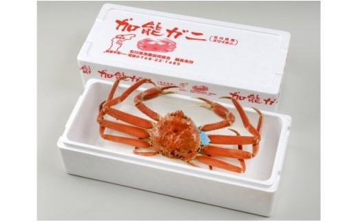 【配達日時指定できます】加能ガニ(雄ズワイガニ、冷凍)(中)