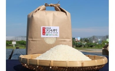 【令和元年度産】近江米「コシヒカリ」 20kg