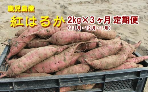 【21561】東串良の特選紅蜜芋紅はるか 2kg×3ケ月定期(11・12・1月)コース