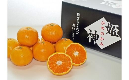 M1518_旬の品種をお届け。厳選!!むなかたの柑橘ブランド「姫神」シリーズ5kg【2020年2月~3月上旬出荷分】