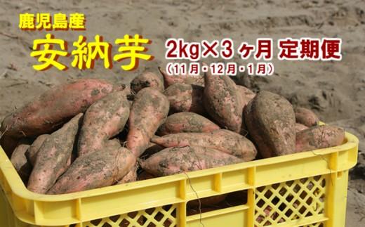 【21559】3ケ月定期(11・12・1月)コース 東串良の濃密安納芋 2kg
