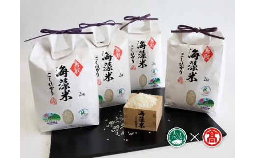 【40-h1】海藻米こしひかり(大山ブランド会)