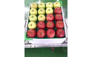 【定期便3回】紅白りんごサンふじ、王林他約5kg