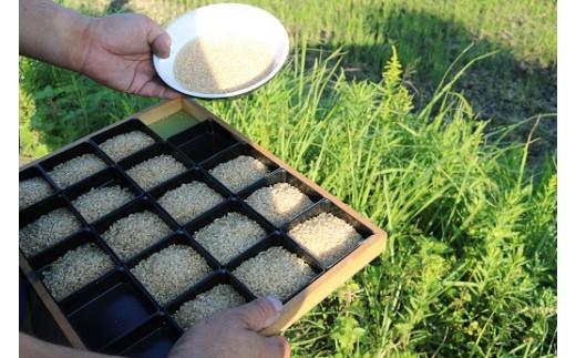 お米の農産物検査の様子。