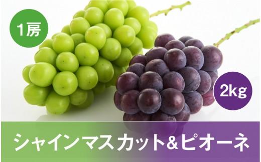 シャインマスカット&ピオーネコース(2020年9月スタート)【定期便】 P-1234