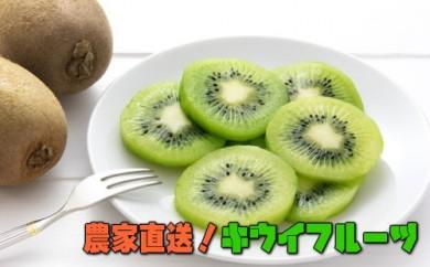 【大人気】農家直送!濃厚キウイフルーツ 秀品 約2kg