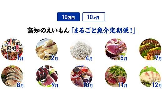 【10カ月】高知のえいもんまるごと魚介定期便!10万円コース