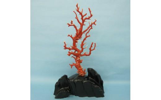 珊瑚職人館の珊瑚の原木・拝見・置物(g11)