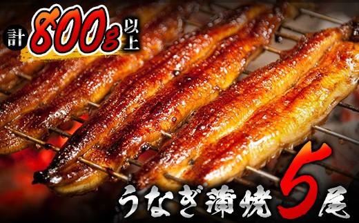 BB15-12 うなぎ蒲焼5尾(計800g以上)国産 都農町加工品