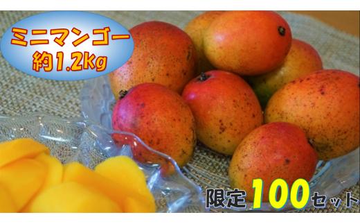 【大人気!】眞ちゃん自慢の『ミニマンゴー』約1.2kg ◆2020年7月中旬順次発送予定◆
