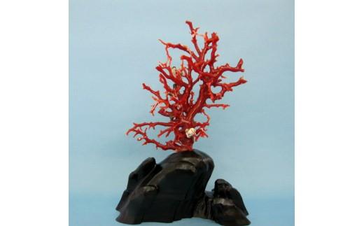 珊瑚職人館の珊瑚の原木・拝見・置物(g9)