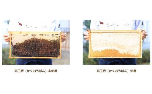 隔王板を用いためずらしい採蜜法がおいしさの秘密