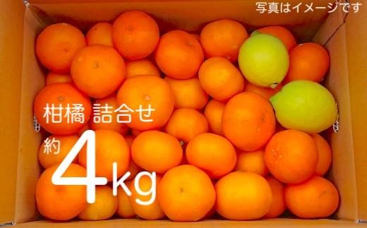 広島県の離島・大崎上島から届く「旬の柑橘の詰め合わせ」約4kg