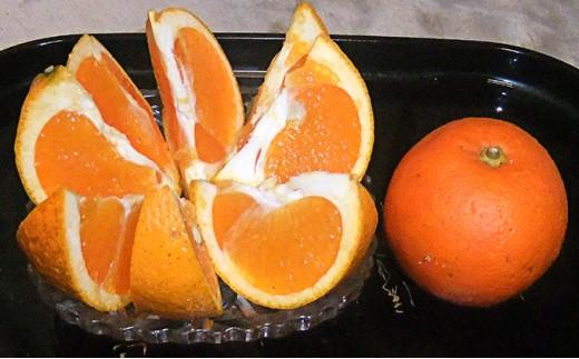 [№5601-0100]【数量限定】愛南産 ブラッドオレンジ(タロッコ)5kg
