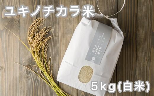 【新米】5kg あきたこまち「ユキノチカラ米」