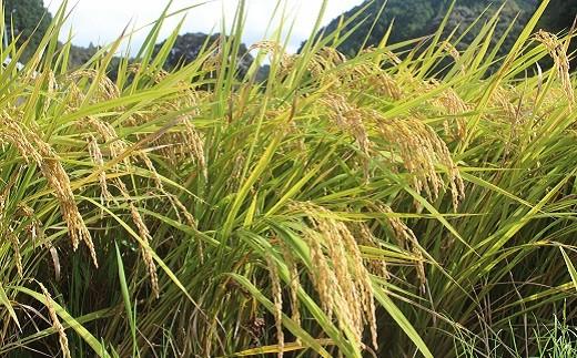 [1237]【9カ月連続お届け】空海ゆかりの里 うまにのおいしいお米(白米5kg)