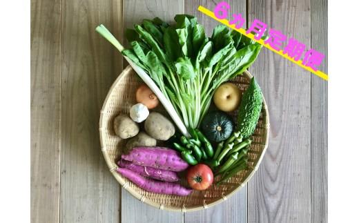 宮崎県産の新鮮野菜の8種盛セット!6ヵ月定期便【E74】