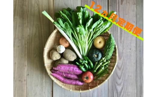 宮崎県産の新鮮野菜の8種盛セット!12ヵ月定期便【E75】