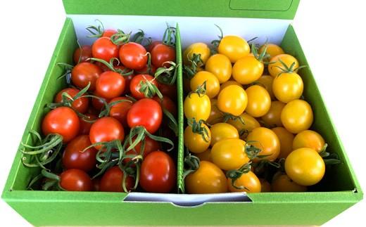 八代市産 宮島農園 ミニトマト 1kg プチトマト 新鮮