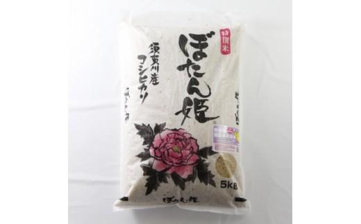 <地元ブランド>令和元年産ぼたん姫玄米 5kg【1061616】