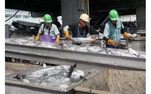 山川港の水揚げ風景
