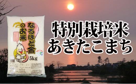 [№5685-1304]あきたこまち減農薬 白米10kg(5kg×2)