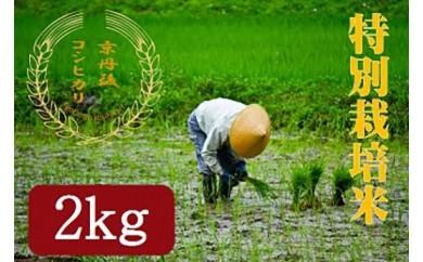 【半年間お届け】特別栽培米 京丹後コシヒカリ2kg 月1回×6カ月