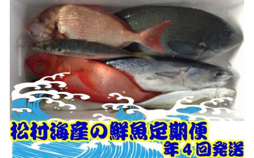 31mk004b 松村海産の朝獲れ鮮魚定期便(年4回発送)
