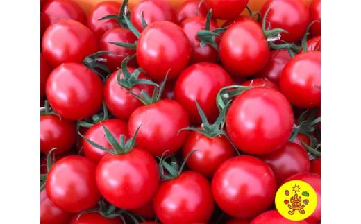 No.128 驚くほどあま~い、山のふ元のあまトマト(フルティカ・アイコ・小鈴の3品種) / 農産物 野菜 とまと 甘い 宮城県 特産