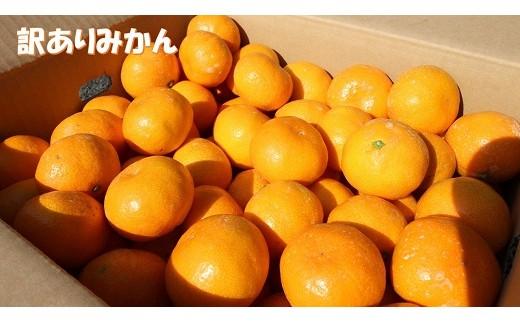 【B96】【訳あり】黒田農園直送 西宇和産温州みかん 10㎏(サイズ不揃い)