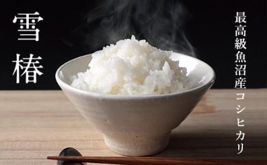 【頒布会】最高級魚沼産コシヒカリ「雪椿」60kg×全12回 特別栽培米