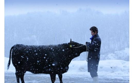 豪雪地帯尾花沢で育てられる牛は、厳しい冬の寒さから身を守るため、自然に上質な脂を身につけていきます。