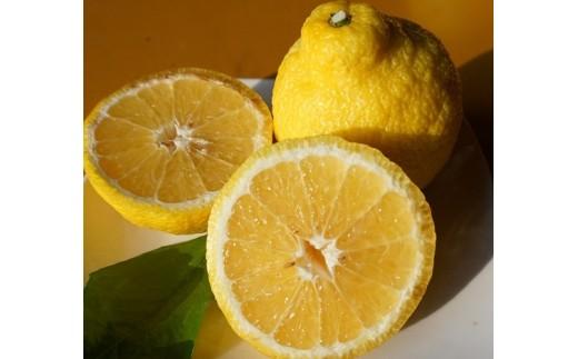 6-02 【数量限定】細川果樹園直送 優しい甘味と爽やかな香り広がる「はるか」5kg