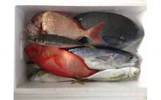 31mk006b 松村海産の朝獲れ鮮魚定期便(年12回発送)