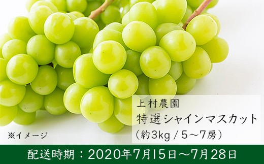 U161 上村農園 特選シャインマスカット5~7房(3kg箱)
