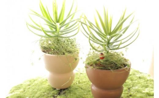 【アートフラワー】空気をきれいにする、観葉植物 小
