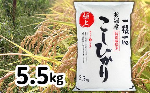 48-5H1新潟県長岡産特別栽培米コシヒカリ5.5kg