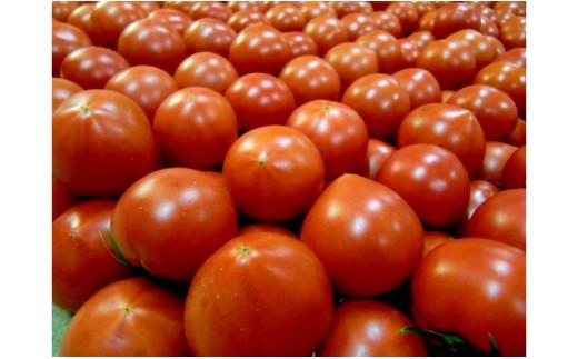 310512-010.輝く宝石 フルーツトマト『みらい』