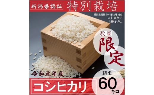 【数量限定】 新潟県産 コシヒカリ 県認証 特別栽培米 「獅子米」精米 60㎏