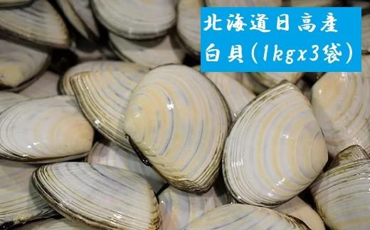 前浜で水揚げした白貝です。