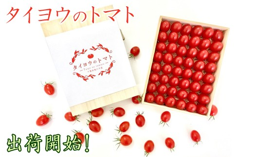 """1-85 極みフルーツトマト""""タイヨウのトマト"""""""