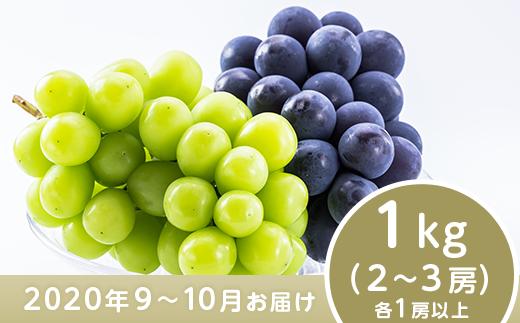 J0502ナガノパープル&シャインマスカット詰合せ1kg【2020年9月以降出荷分】